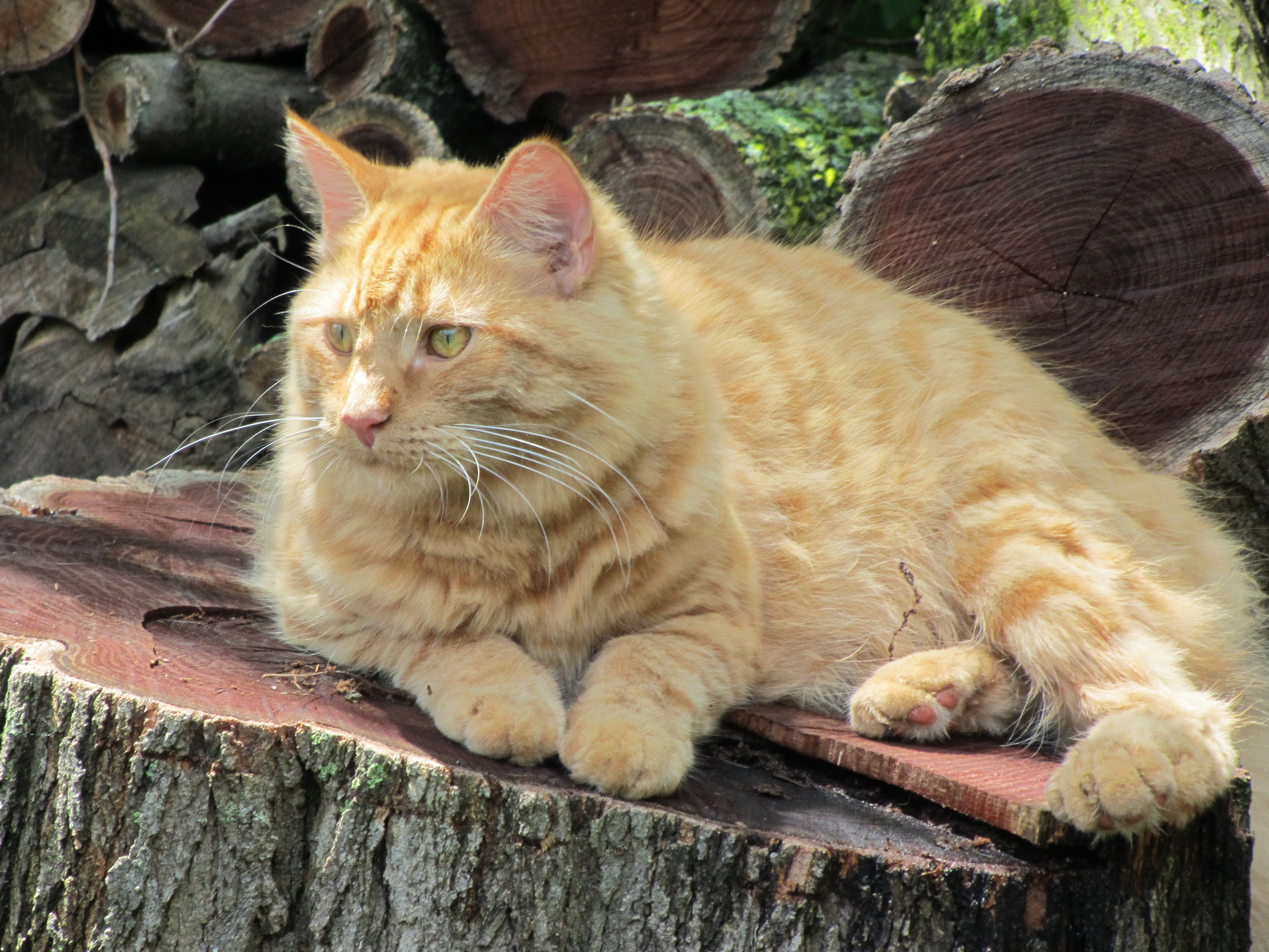 How Long Metamucil For Cats